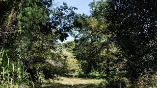 preview picture of video 'Jardín Botánico bei Cienfuegos'