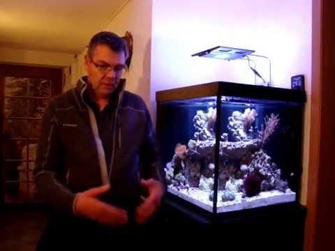 Entstehung meines Riff-Aquariums Teil 12: Woche 5 bis 8