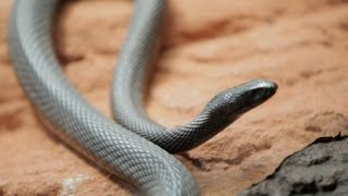Why Do Venomous Animals Live In Warm Climates?