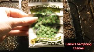 how to grow brussel sprouts from seed, how to start brussel sprouts from seed