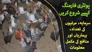 poultry farming in pakistan - Kênh video giải trí dành cho