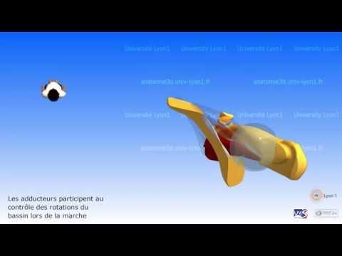 Comme traiter les muscles des mains