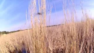 Рыбалка и отдых в алтайский край на озере горькое