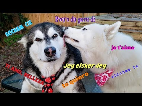 Malamute & Husky Wanted To Say I Love You In Your Native Language