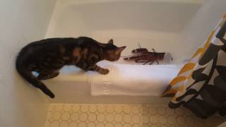 Bonkers the cat and hide pet lobster
