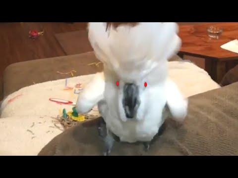 No Puedes Negar El Talento Vocal Que Tienen Estas Aves