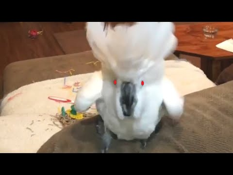 Super Vocal Birds | Funny Bird Video Compilation 2017