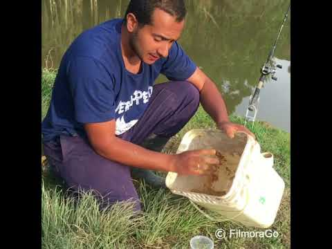 La pesca in video dvend