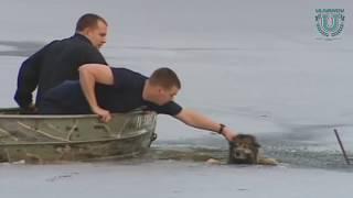 Люди спасают попавших в беду домашних животных. Доброе видео