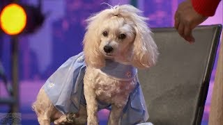 America's Got Talent 2017 WOW! Edna & Mia Moore the Counting & Reading Dog Full Audition S12E02