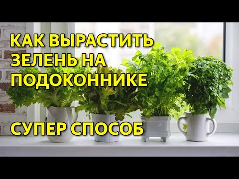 Как вырастить зелень на подоконнике. Выращивание зелени дома.