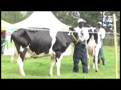 Dairy farmers call on the government to give them more incentives