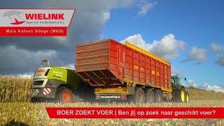 MKS (Maïs Kolven Silage) | Wielink Agrarisch Handelsbedrijf B.V.