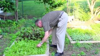 Ohio Native Plant Gardening Like a Pro