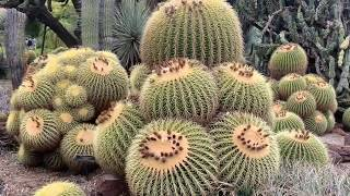 Amazing Cactus & Flowers Garden Tour - Huntington Library 2019