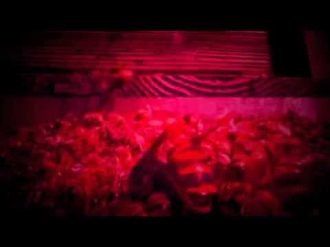 Honey Bee -- Music Video by: Sidewalk Dave