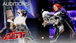 Adorable Dog Performs Incredible Tricks With Trainer - America's Got Talent 2020