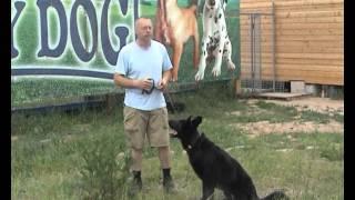 Смотреть онлайн Как научить собаку выполнять команду «Сидеть»