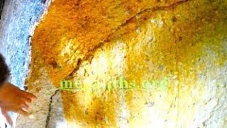 Živé kamenné huby