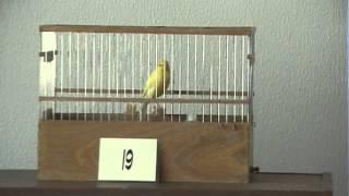 Пятый краснодарский конкурс канареек 3/4