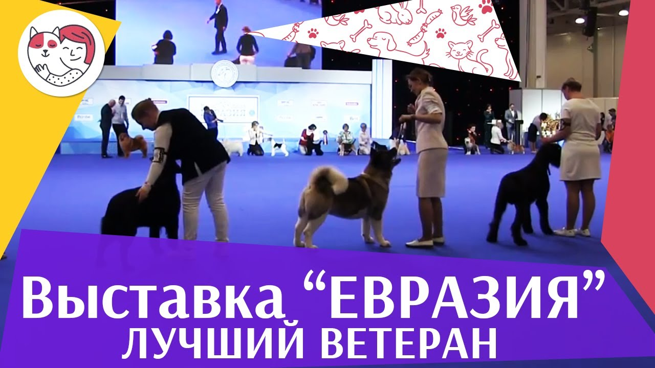 Best in show Лучший ветеран 19 03 17 на Евразии ilikepet