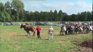 видео лошади перетягивающей канат условиях повышенной