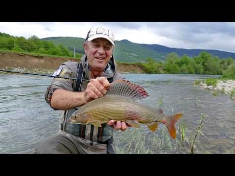 Grayling fly fishing in Montenegro, Bosnia and Serbia