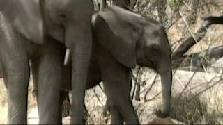 المحافظة على الحياة البريّة في العالم