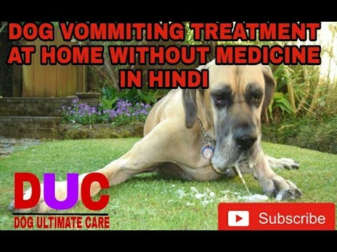 How To Stop Dog Vomiting At Home ! In Hindi ! Dog Ultimate Care