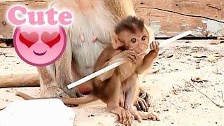 赤ちゃん猿お母さんが好きBabymonkey