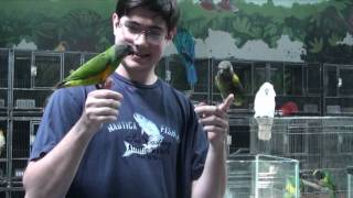 Kili Senegal Parrot - Visiting Bird Store