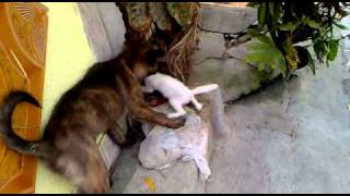murder cat kill by the dog