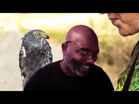 Taller sobre aves urbanas (Online)