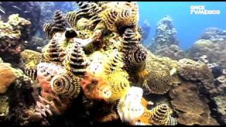 Nuestros Mares - Arrecife de coral