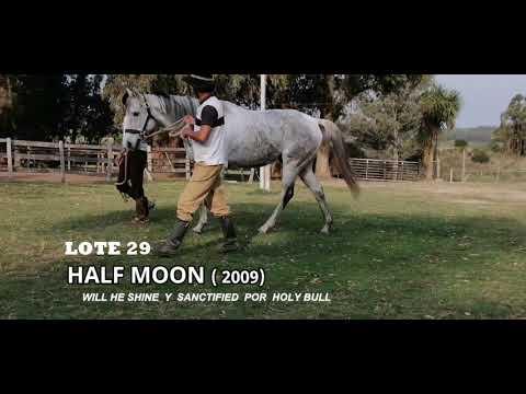 Lote HALF MOON