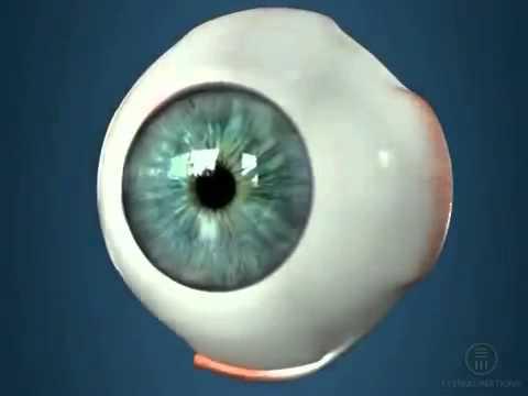 Глазное давление 26 что это