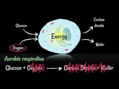 Detoxifiere cu regimul oshawa