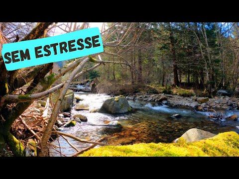 [ SEM ESTRESSE ] Msica Para aliviar estresse   Musica Para Relaxar e acalmar ansiedade.