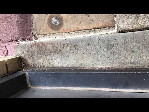 Front Stoop Full of Pavement Ants in Jersey City, NJ