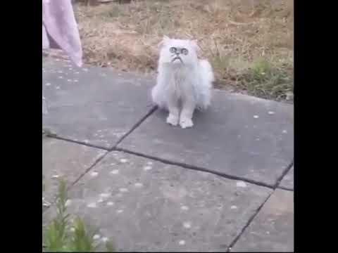 Outo kissa ilmestyy pihalle ja ei räpsäytä silmiään – Kuvaaja meinaa panikoida