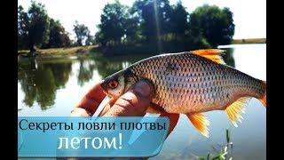 Где ловить плотву на озере летом