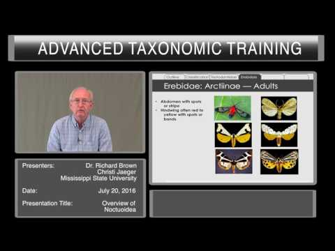 Introduction to Lepidoptera - overview of Noctuoidea