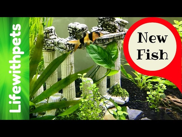 New fish and Plants in a 75 Gallon Betta Fish Tank. (Part 3)