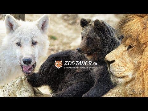 Fotografie z návštěvy zoo Tábor