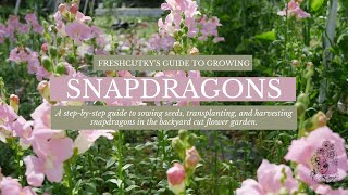 How To Grow Snapdragons From Seed - Planting Snapdragon Seed Cut Flower Gardening For Beginners