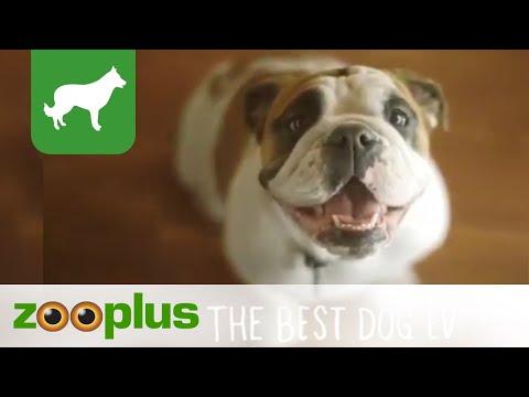 Hundetrockenfutter | Merrick | zooplus
