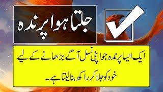 Greek Mythology - What Is Phoenix Bird In Urdu - Purisrar Dunya - Informative Videos