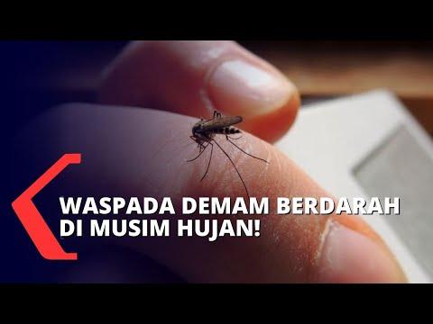 selain dbd dinkes jawa timur ingatkan warga waspada pada penyakit ini di musim hujan