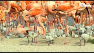 El libro rojo, Especies amenazadas - Flamencos, la ría en rosa