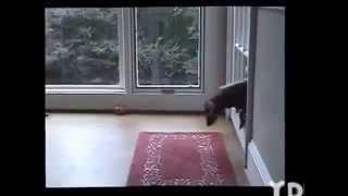 Funny Animals - Laughed A Lot With The Actions Of Animal Humor- Nhũng Pha Hài Hước Nhất Của Chó